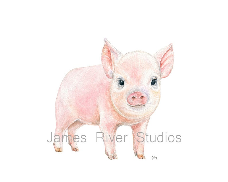 Pig Art Pig Painting Pig Print Pig Watercolor Painting Animal Etsy