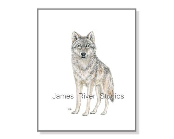 Grey and Black Wolf in Snow Wild Animal 16x20 four Set Wall Decor Art Print Post