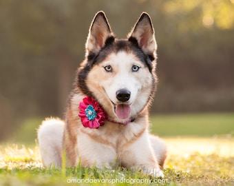 Dog collar flower, Dog flower, girl dog bow, Dog collar Bow, Dog Bow, Collar Bow, Detachable Bow, Collar Flower, Dog flowers, satin dog bow