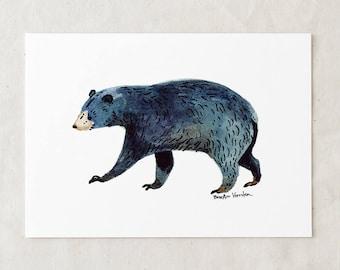 Black Bear - Art Print