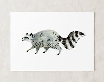 Raccoon - Art Print