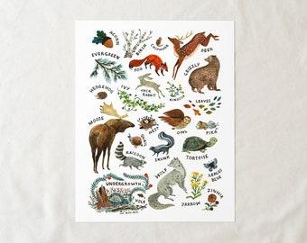 ABC Woodland Alphabet - 8x10 Art Print
