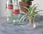 20 39 s Glass Bud Vase Propagation