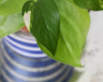 Wedgwood Blue Jasper Cache Pot