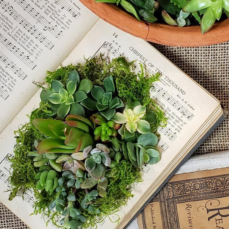 DIY Succulent terrarium kit for succulents in books or cups image 0