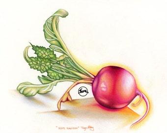 Ripe Radish - Pencil Drawing - Fine vegetable Art Print
