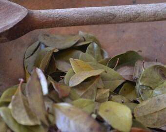 ORGANIC WINTERGREEN herb • Gaultheria procumbens • Dried • Leaf • Ericaceae • Non-irradiated • Non-gmo • Whole Herb • USA Grown • 1/2 oz
