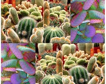 Rare LW Cactus Seeds x 10