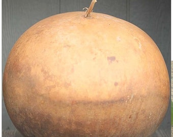 Bushel Gourd Seed, RARE Lagenaria siceraria, GIANT Gourd weighing up to 100 LBs & 5 Feet in Diameter - Perfect For Crafts