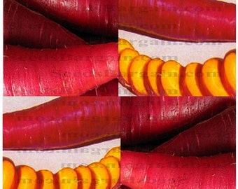 100 x COSMIC PURPLE Carrot seeds - Beautiful carrot with a very sweet flavor - YELLOW Flesh