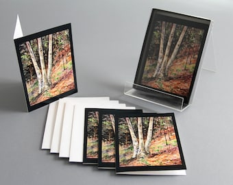 "Notecard Fall Nature Birch Tree Art from the watercolor painting ""Hillside Birch"" by Kristine Plum in box sets of 4, 6 and 12"
