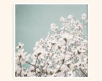 Magnolia Tree, Blue Sky - Floral Photo Print - White Flowering Tree - Magnolia Flowers - Soft Blue Flower Picture - Nursery Bedroom Art