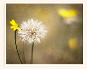 Dandelion Wall Art Print - Bedroom Wall Decor - Botanical Print - Nature Photo - Green and Yellow Flowers - Make a Wish