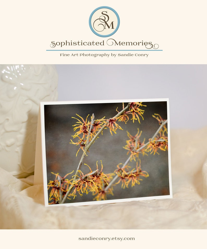 Nature Photo Note Card  Witch Hazel  Nature Photography  image 0