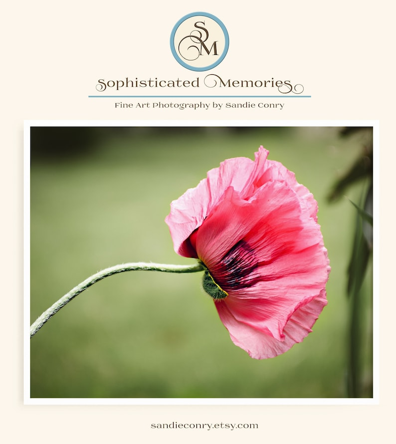 Pink Oriental Poppy Flower Photo for bedroom or bathroom wall image 0