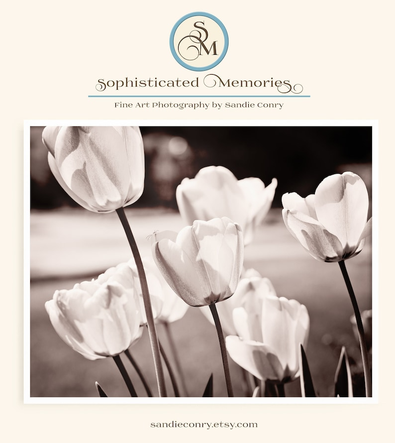 Tulip Photo for Spring Decor in living room Vintage inspired image 0