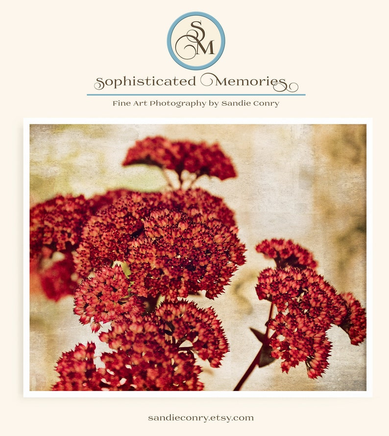 Red Dried Flower Bouquet  Nature Photography  Wall Art  image 0