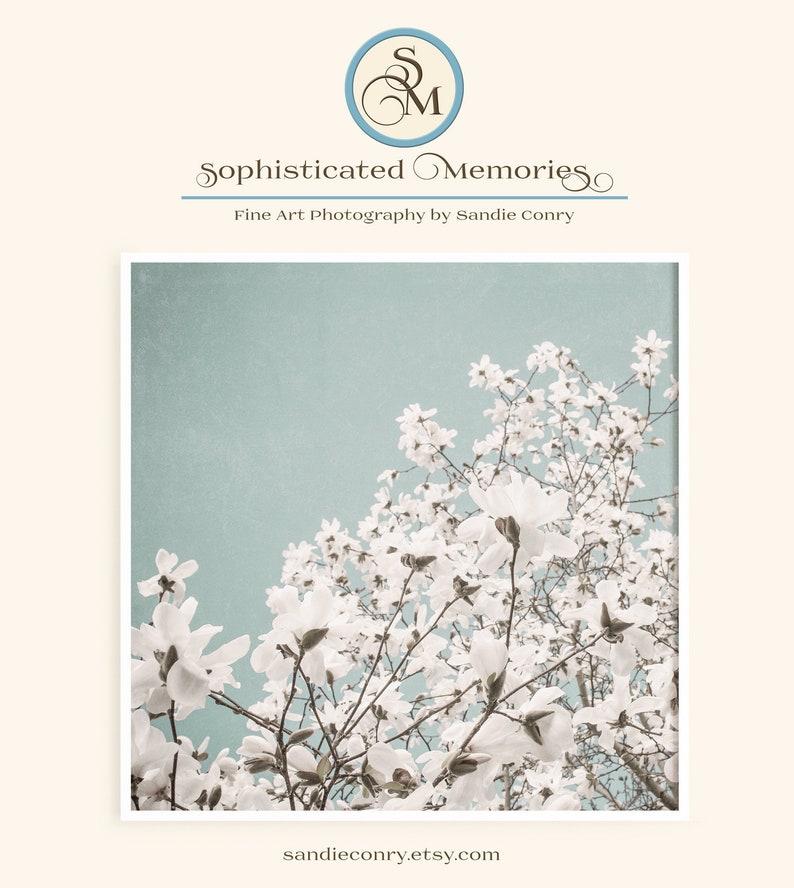 Magnolia Tree Blue Sky  Floral Photo Print  White Flowering image 0
