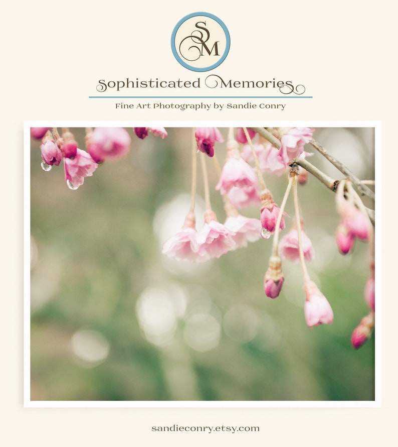 Cherry Blossom Photo  Spring Flower Photography  Pink image 0