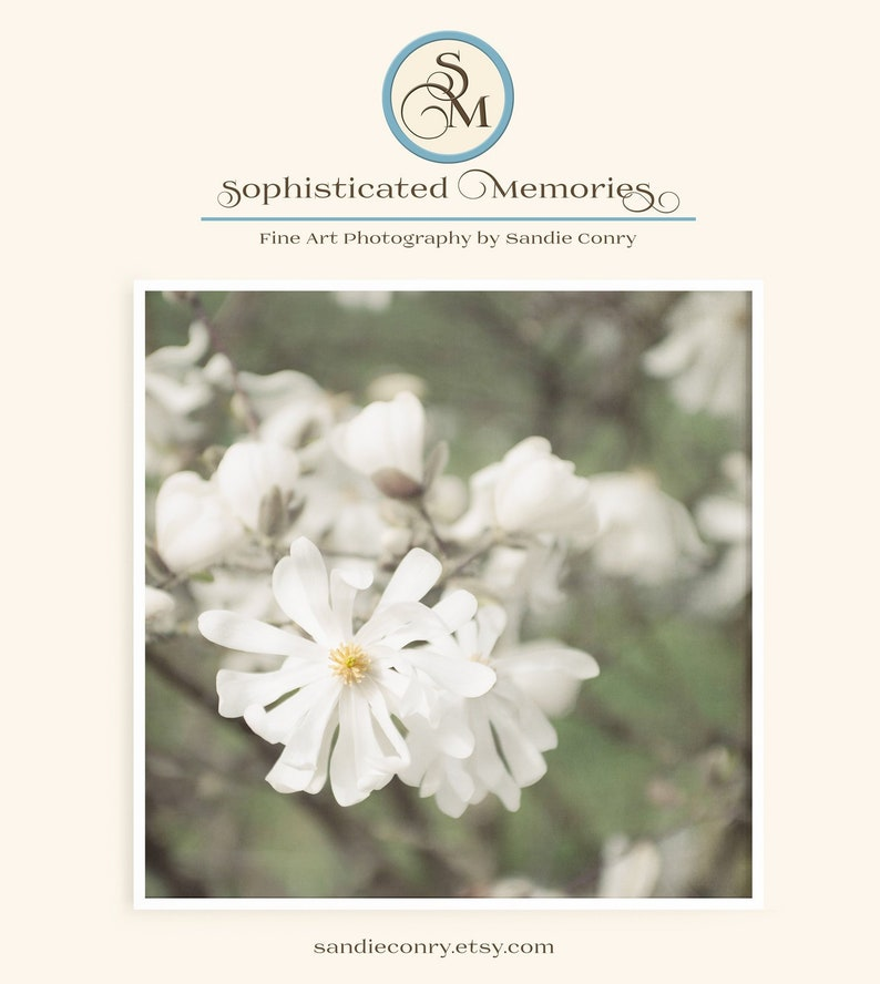 Star Magnolia Flower Photograph  White Flowers  Dreamy image 0