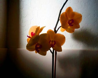 Moody Orchid Color Photo