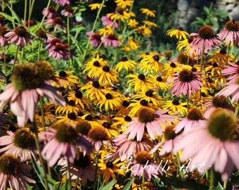 Wild Flowers- Photograph