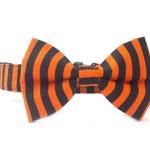 Orange and Black Stripe Halloween Dog Collar Bow Tie Collar Set-- Removable Bowtie