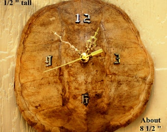 Unique Turtle Shell clock