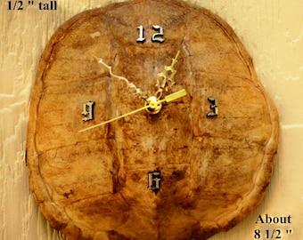 Unique Turtle Shell clock