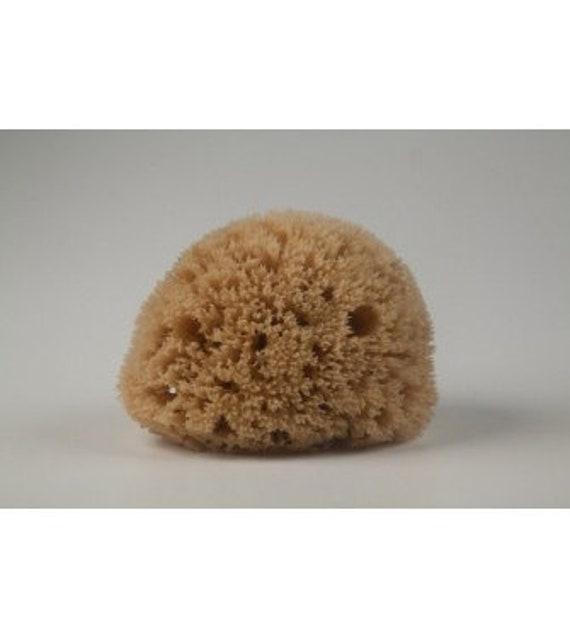 Face Exfoliating Sponge Natural Honeycomb Sponge Natural Etsy