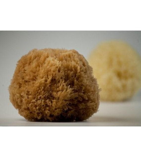 NATURAL GRASS SPONGE / fine natural sponge/ baby bath sponge/ | Etsy