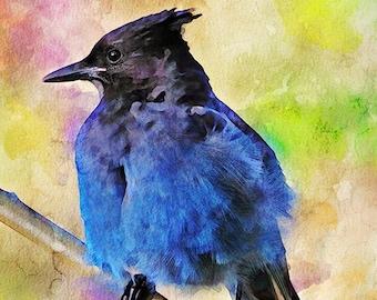 Stellers Jay Print, Jay Bird Art, Bird Lover Art Print, Nature Fine Art, Wildlife Artwork, Backyard Birds Art, Bird Lover Art, Birdwatchers