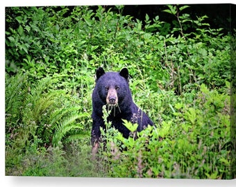 Bear Canvas, Bear Wall Art, Animal Canvas, Nature Wall Art, Bear Photograph, Bear Art, Wildlife Photography, Black Bear, Woodland Animals