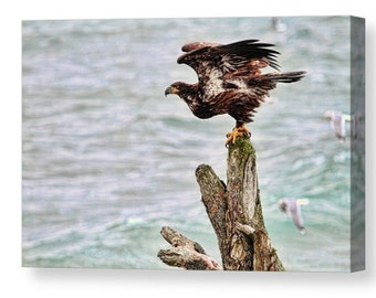 Eagle Art,Nature Wall Art, Bald Eagle, Bird Wall Art, Bird Photography,  Raptors, Nature Photography, Ocean Canvas Art, Beach Decor,Seagulls