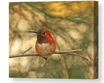 Hummingbird Canvas, Bird Canvas Art, Rufous Hummingbird, Humming Bird Art, Bird Wall Art, Bird Walll Decor, Hummer Wall Art