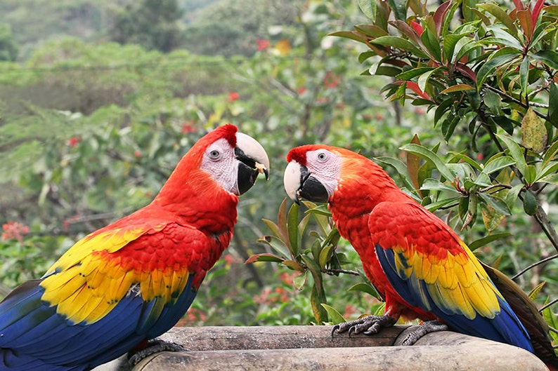 Parrot Print Two Birds Tropical Print Colorful Wall Art image 0