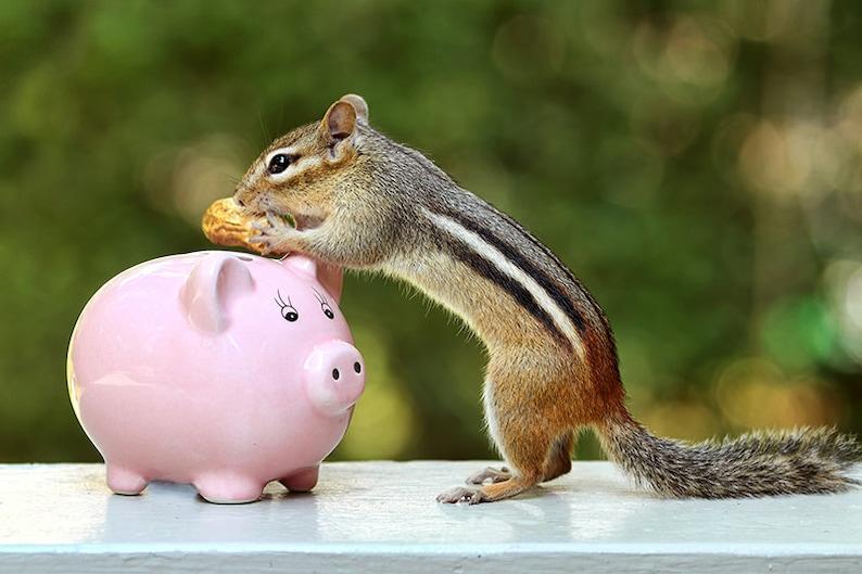 Piggy Bank Chipmunk Print Peanuts Girls Room Decor Funny image 0