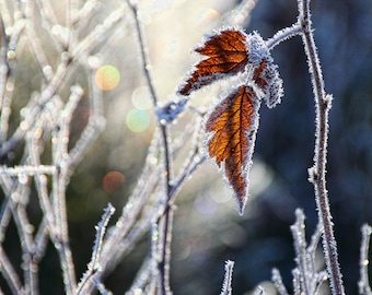 Fine Art Prints, Nature Prints, Winter Photography, Nature Photography, Winter Wonderland, Jack Frost, Christmas Lights, Fine Art Photo
