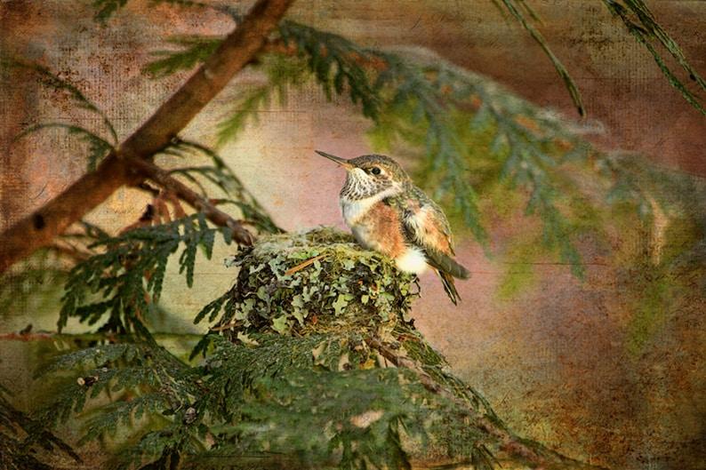 Hummingbird Print Baby Hummingbird Hummingbird Wall Art image 0