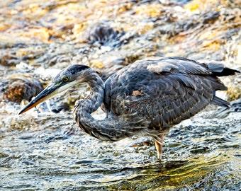 Wildlife Decor, Blue Heron, Heron Photograph, Bird Print, Nature Photography, Nature Prints, Nature Art, Wildlife Photography, River