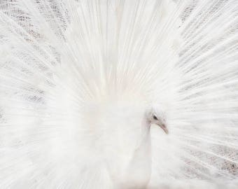 White Peacock, Peafowl, Peacock Print, White Bird, Peacock Photograph, White Bird Art, Peacock Decor, Nature Photography, White Feathers