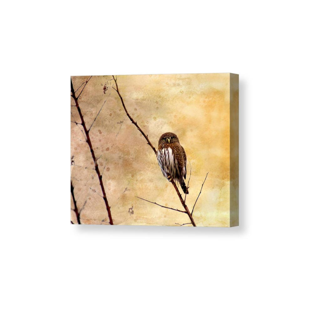 Owl Canvas Art Pygmy Owl Small Owls Nature Canvas Prints | Etsy