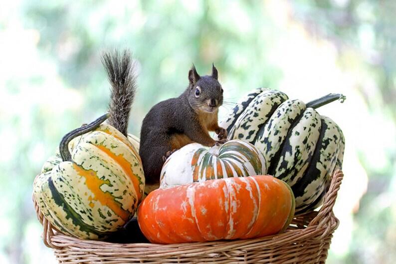 Autumn Squirrel Art Fall Decor Woodland Animals Funny image 0