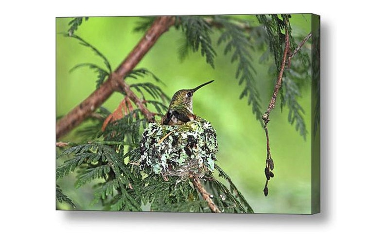 Hummingbird Art Mothers Day Gift Bird Photography Bird image 0