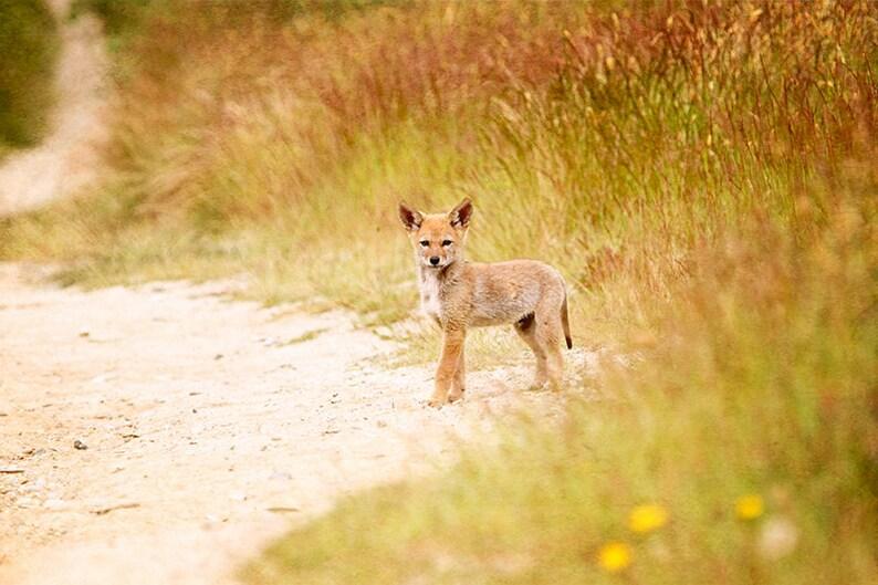 Wildlife Art Coyote Woodland Animals Wildlife Prints Baby image 0