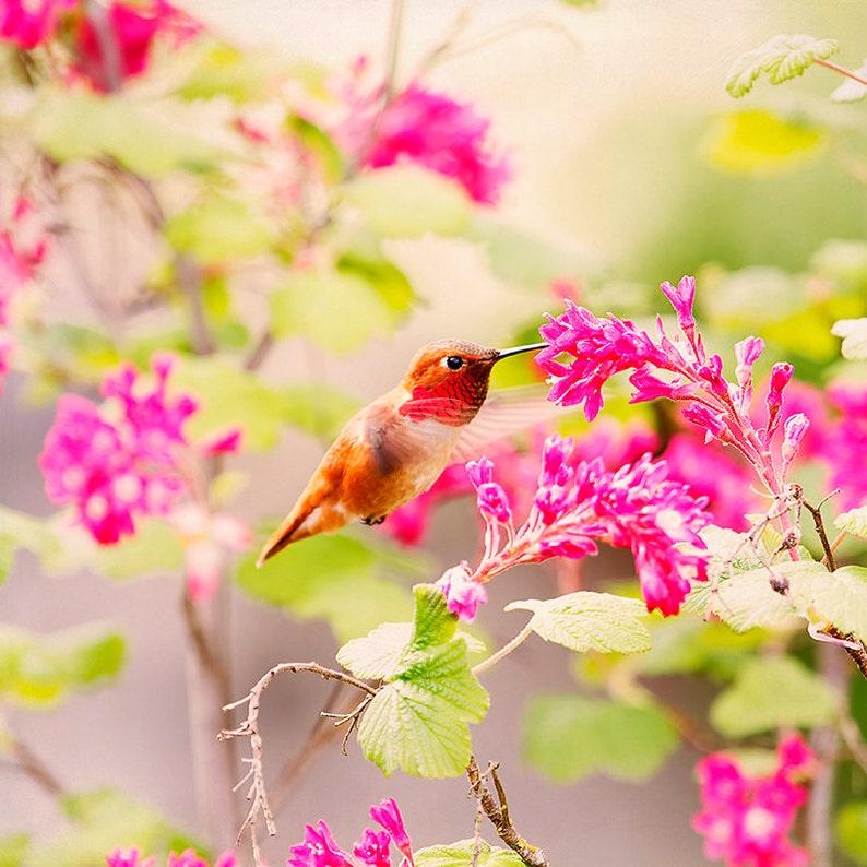 Hummingbird Print Hummingbird Decor Hummer Humming Bird image 0