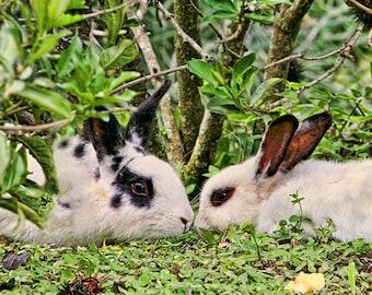 Rabbit Lover Gift, Rabbit Print, White Rabbit, Bunny Print, Animal Love, Nature Photography, Wildlife Photo, Rabbit Photography, Bunnies