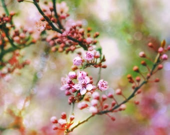 Spring Flowers, Apple Blossoms, Floral Print, Flower Photography, Pink and Green Art, Large Wall Art, Pink Green Decor, Spring Blossoms
