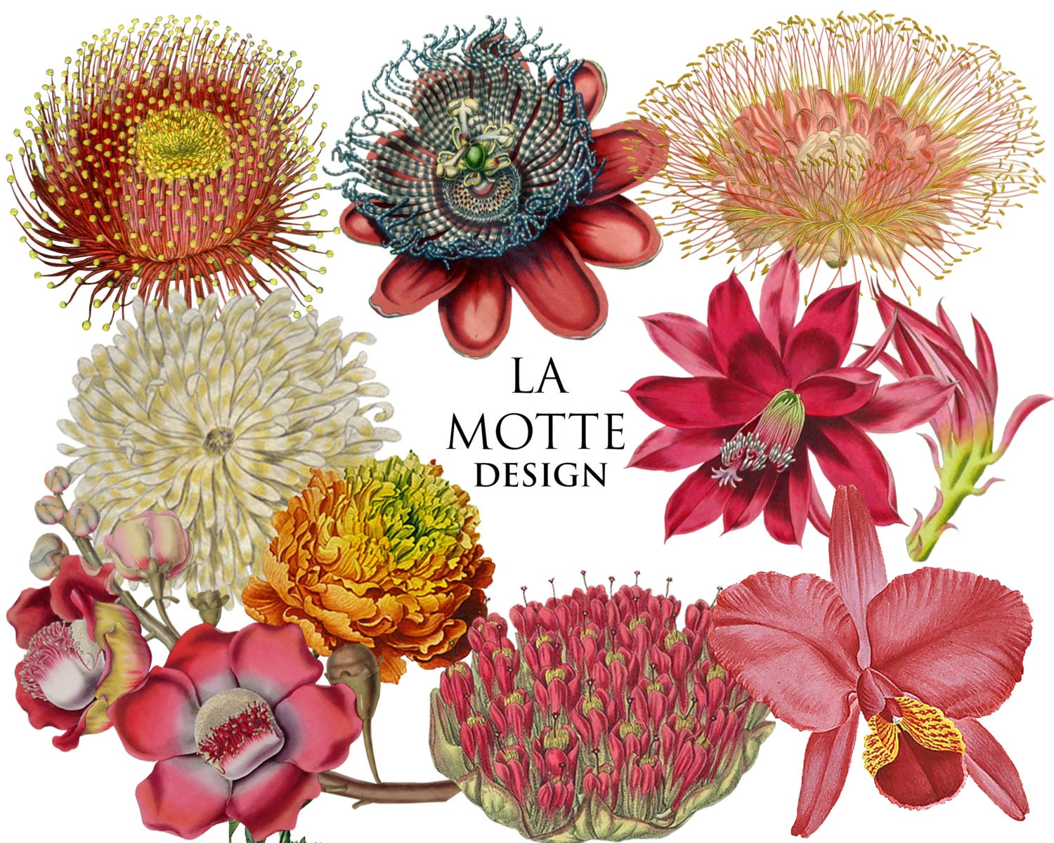 Flower Clipart Exotic Flowers Clipart Of Beautiful Color Wild Etsy