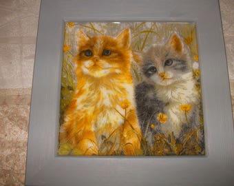 Frame cats kittens